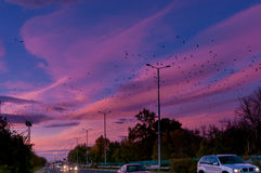 Travel. Road and cars on the background of sunset and birds in the sky royalty free stock photo
