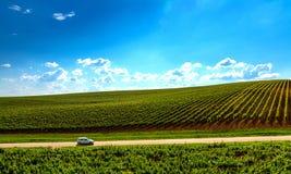 Travel Romania. Vineyard lanscape in Recas, Romania Stock Photo