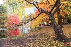 Travel Sapporo in Autumn. Royalty Free Stock Images