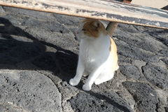 Travel scenic cats Stock Photography