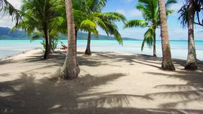 Palm trees on tropical beach in french polynesia. Travel, seascape and nature concept - tropical beach with palm trees and sunbeds in french polynesia stock footage