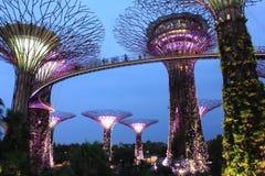 Travel singapore. Big tree marina stock image