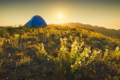 Travel tent on a hill_1 Royalty Free Stock Image