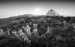 Travel tent on a mountain. Monochrome colors Stock Photography