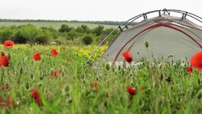 Travel tent stands on blooming spring field with flowers swaying in wind. Light travel tent stands on blooming spring field with red poppies and yellow flowers stock video footage