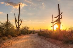 Arizona desert at sunset with Saguaro cacti in Sonoran Desert near Phoenix. Travel to Arizona desert at sunset with Saguaro cacti in Sonoran Desert near Phoenix royalty free stock photography