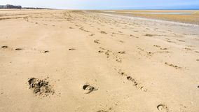 Footprints in the sand beach of Le Touquet Royalty Free Stock Images