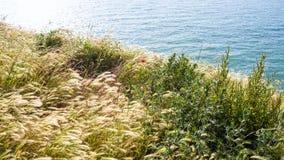 Grasses on edge of Cap Gris-Nez in France. Travel to France - grasses on edge of Cap Gris-Nez of English channel in Cote d'Opale district in Pas-de-Calais region Stock Photo