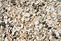 surface from mollusks shells of beach in Cancale Stock Photos