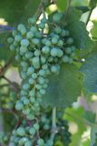 Travel to France where the grapes grow! royalty free stock photo