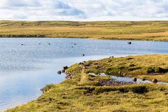Marsh landscape of Iceland in september sunny day Stock Photos