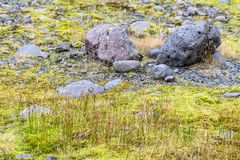 Pumice and grass near Solheimajokull glacier Royalty Free Stock Images