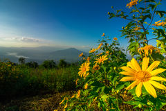 The mountains look beautiful and yellow flowers. Travel to the mountains, fog, many people to see the beautiful scenery. At the top of the mountain Stock Photos