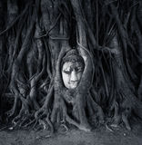 Travel to Thailand, Ayutthaya. Old tree Buddha stone sculpture. Royalty Free Stock Photo