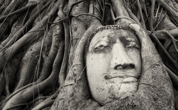 Travel to Thailand, Ayutthaya. Old tree Buddha stone sculpture. Royalty Free Stock Image