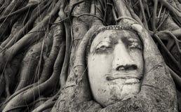 Travel to Thailand, Ayutthaya. Old tree Buddha stone sculpture. royalty free stock image