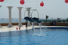Dolphinarium in Turkey. Flying dolphins royalty free stock photography