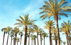 Travel, tourism, vacation, nature and summer holidays concept. Palm trees, blue sky background amazing landscape royalty free stock photography