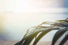 Travel tropical beach holidays background with palm leaves and blurred sea during sunset Stock Photo