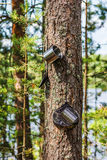 Travel utensils hanging on a tree in the forest Royalty Free Stock Image