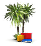 Travel, vacations and tourism concept. Group of color travel cases under green beach island sea and ocean tropical palms isolated on white background Stock Photo