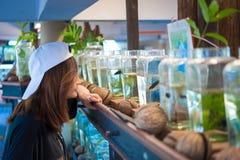 Travelerмолодой женщинынаблюдая воюя рыбу в бутылках на Стоковые Фотографии RF