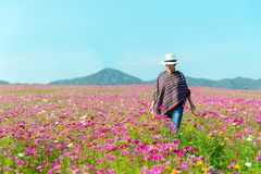 Traveler Asian women walking in outdoor the flower field and hand touch cosmos flower, freedom and relax in the flower meadow. stock image