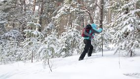 Traveler with a backpack and hiking sticks. The woman in the forest on a background of snow-covered trees. stock footage