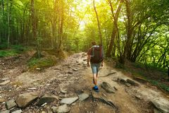 A traveler with a backpack in the spring forest on the path looks ahead. Sunlight through the crowns of trees stock photo