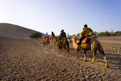 Traveler camels in desert Royalty Free Stock Photos