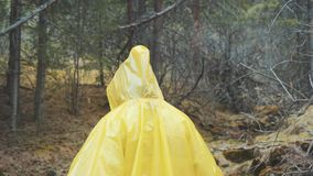 Traveler is clothed in a yellow raincoat. Rear back view of young female hiker walking on trek with backpack through. Dense rain forest nature. Young girl stock video