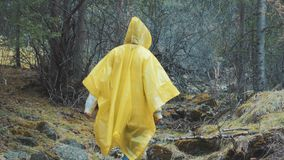 Traveler is clothed in a yellow raincoat. Rear back view of young female hiker walking on trek with backpack through. Dense rain forest nature. Young girl stock video footage