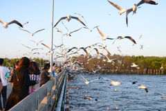 Traveler coming here for feeding food to seagulls Royalty Free Stock Photography