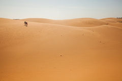 The traveler in the desert Royalty Free Stock Photography