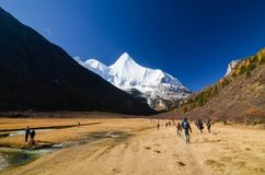 Traveler enjoy trekking at the beautiful lanscape in autumn forest and snow mountain at Yading nature reserve stock photos