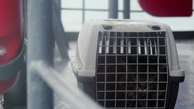 Traveler Maine coon cat in cage floating on a ship in the sea. 3840x2160, 4k stock video