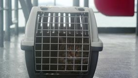 Traveler maine coon cat in cage floating on a ship in the sea. 3840x2160 stock video