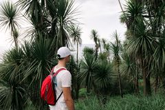 Man with backpack walking in the forest royalty free stock images