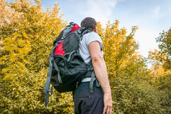 Traveler man with red backpack is walking in autumn forest Royalty Free Stock Image