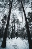 A traveler man walking in snowy forest pathway. A traveler man walking in snowy forest in winter time Stock Photos