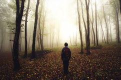 Traveler in mysterious forest in autumn Royalty Free Stock Photos