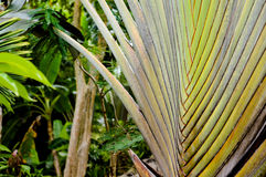 Traveler palm leaf background in nature weave pattern Stock Photo