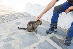 A traveler rests and caresses a wild cat Stock Photography
