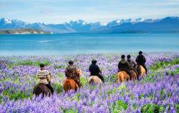 Free Traveler Ride Horse At Lake Tekapo, New Zealand Royalty Free Stock Images - 177279169