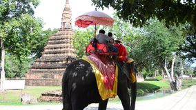 Traveler riding elephant for tour around Ayutthaya ancient city stock video footage