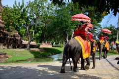 Traveler riding elephant for tour around Ayutthaya ancient city Royalty Free Stock Photography