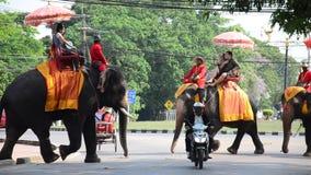 Traveler riding elephant for tour around  Ayutthaya ancient city stock video footage