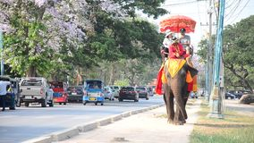 Traveler riding elephant for tour around  Ayutthaya ancient city stock footage