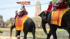 Traveler riding elephant for tour around  Ayutthaya ancient city stock video