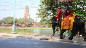 Traveler riding elephant for tour around  Ayutthaya ancient city stock footage